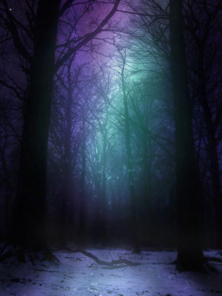 aurora-woods-at-night