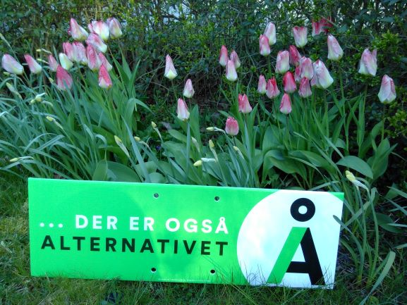 Alternativt-tulipaner